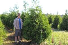 Arborvitae Green Giant 6 ft