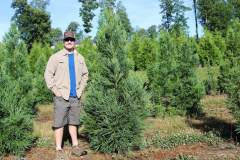Cryptomeria Yoshino 6ft