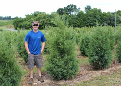 Juniper Eastern Red Cedar